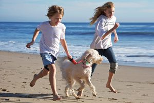 Enjoy a break in our dog friendly caravans in Cornwall